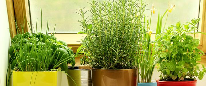 Plantas para el interior for Plantas de purificacion