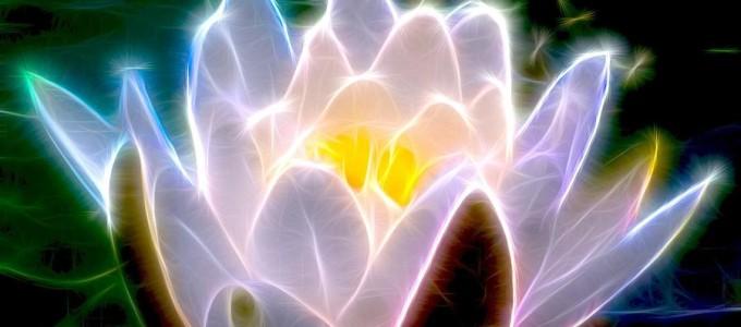 EL Poder de la flor de gardenia - image