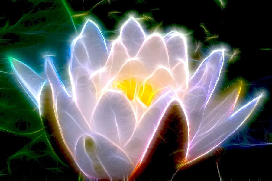 Mira Lo Que No Sabias Sobre La Flor de Gardenia