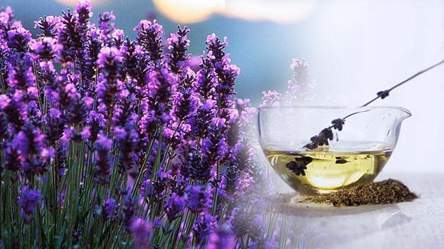 Remedio para dolor de cabeza- Aceite de Lavana- Image