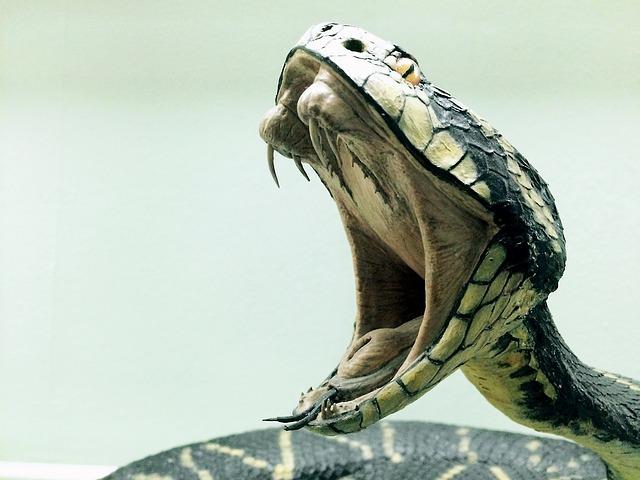 Imagen de culebra para significado de los suenos con serpientes.